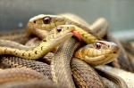 fobia-serpientes
